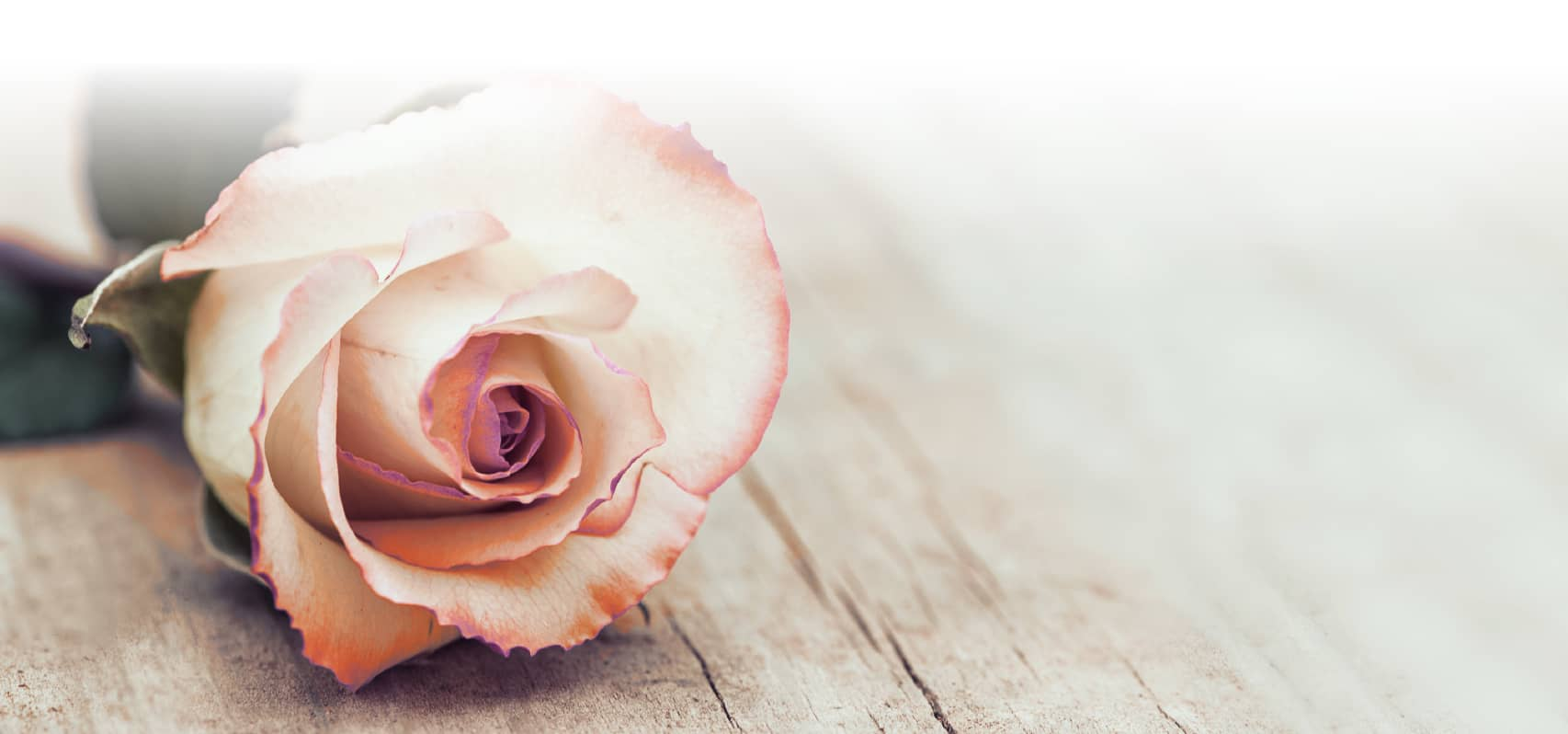 Walsh Funerals & Memorials rose background